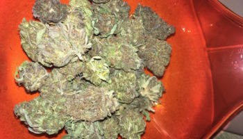 The Cannabis Farm